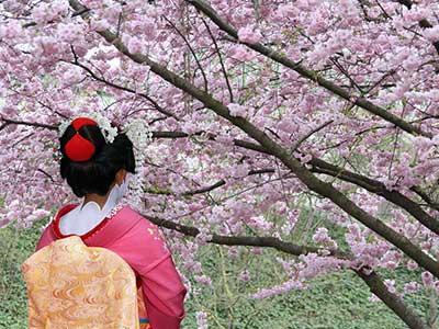 Asia Cruises 2023 Geisha & Cherry Blossoms