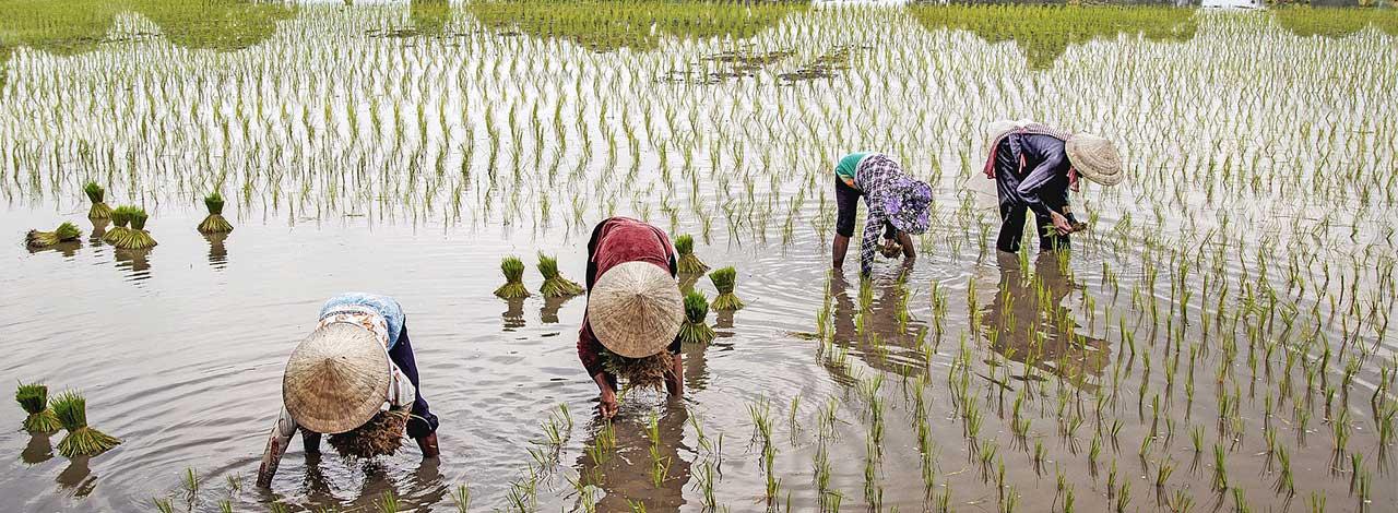 Asia Cruises 2023 Vietnam Rice Field